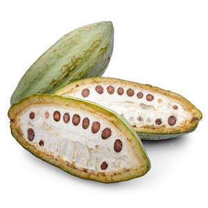 fava-cacao-centro-seb